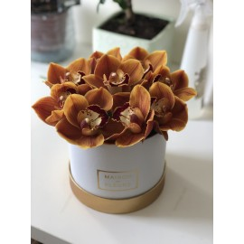 Orchidbox