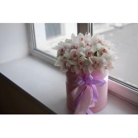 Ох уж эти белые орхидеи!