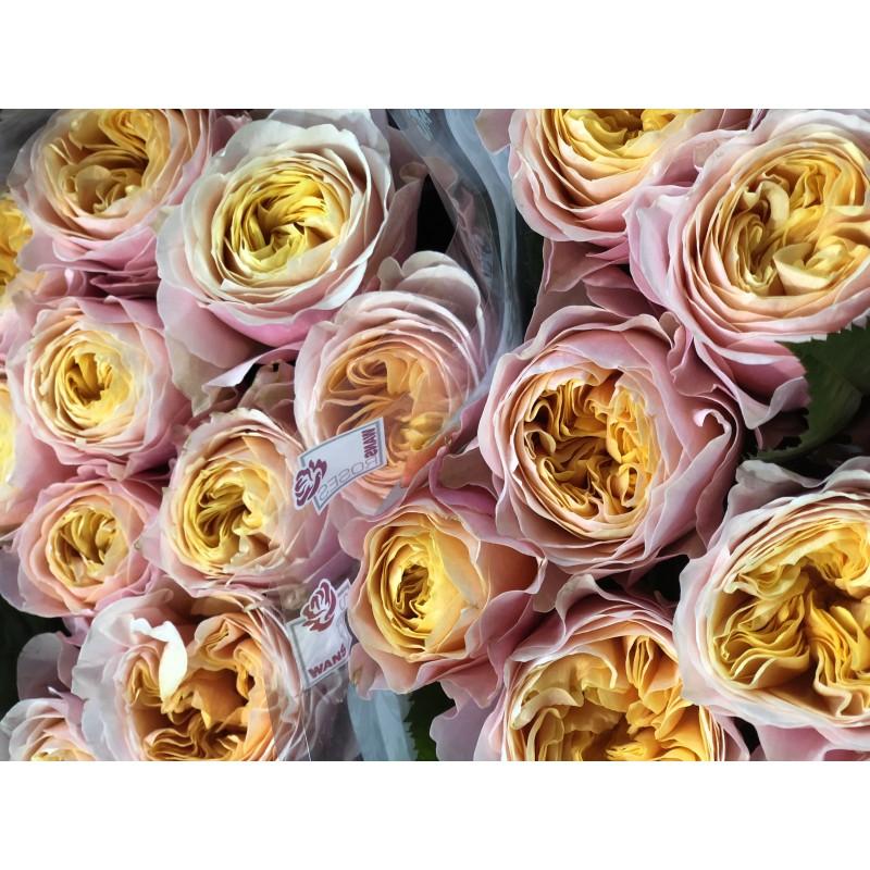 Подписка на розы
