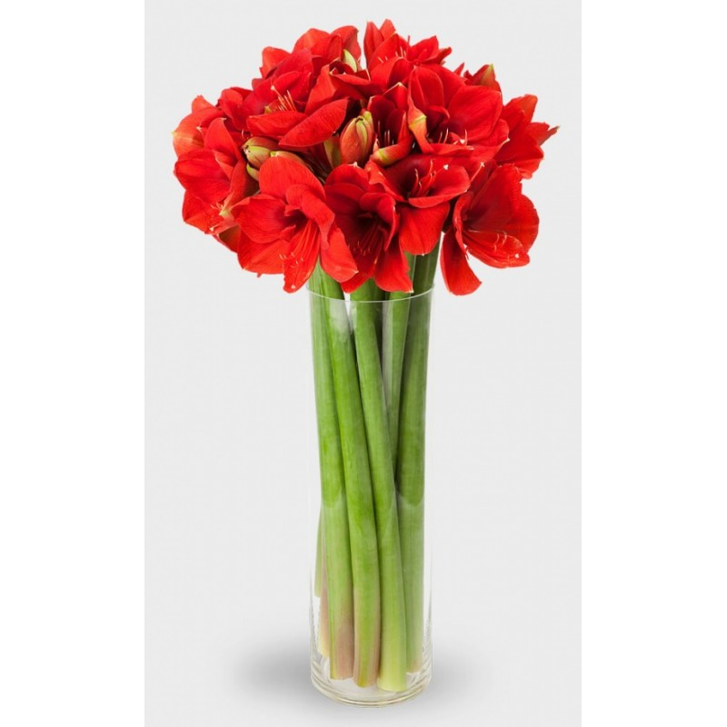 15 амариллисов в вазе
