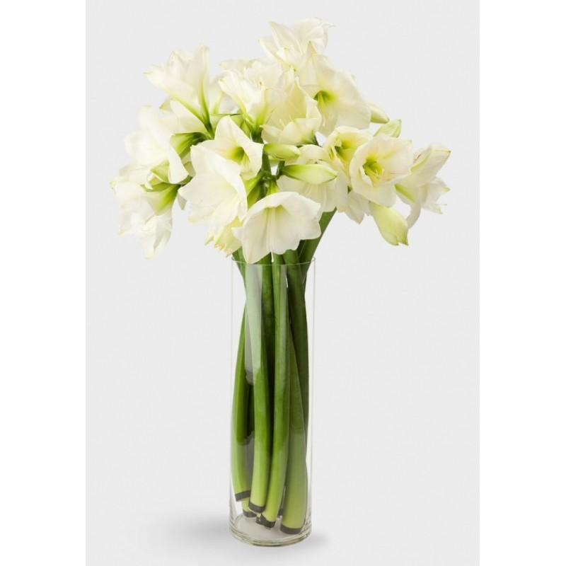9 белых амариллисов в вазе