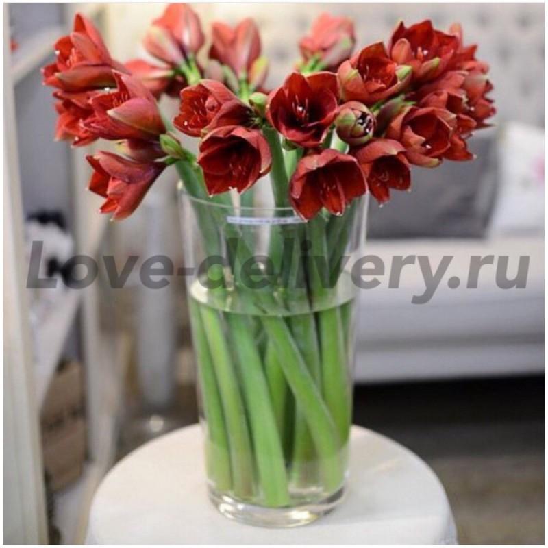 19 амариллисов в вазе