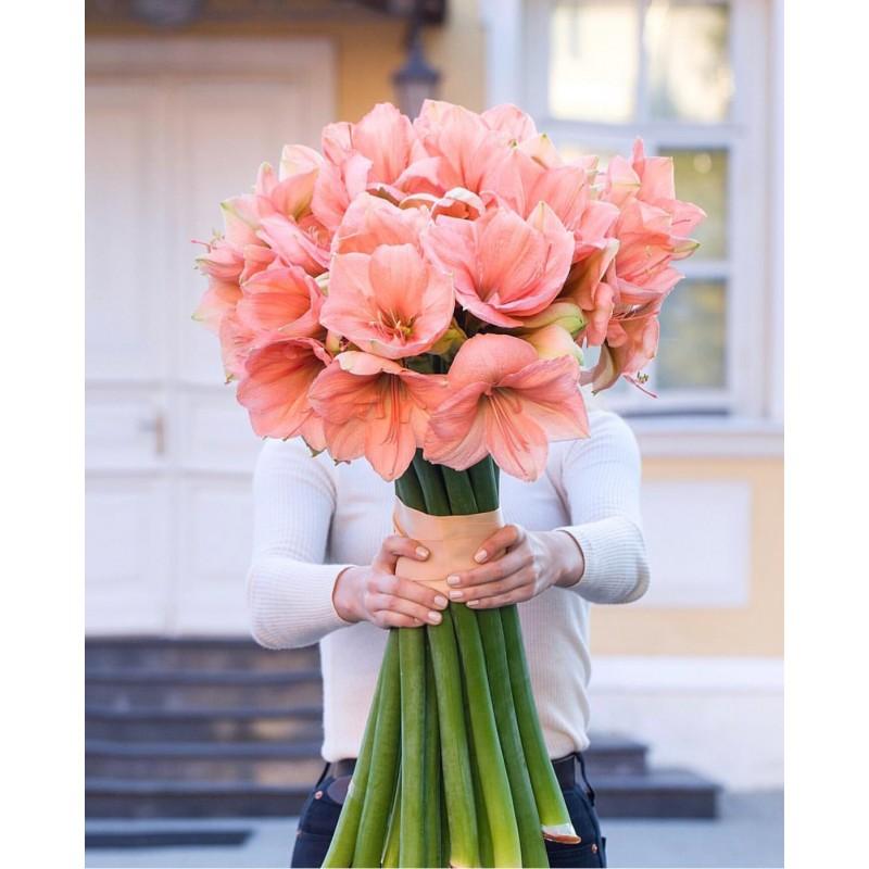 15 розовых амариллисов
