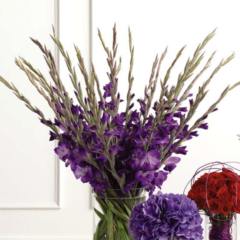 35 фиолетовых гладиолусов в вазе
