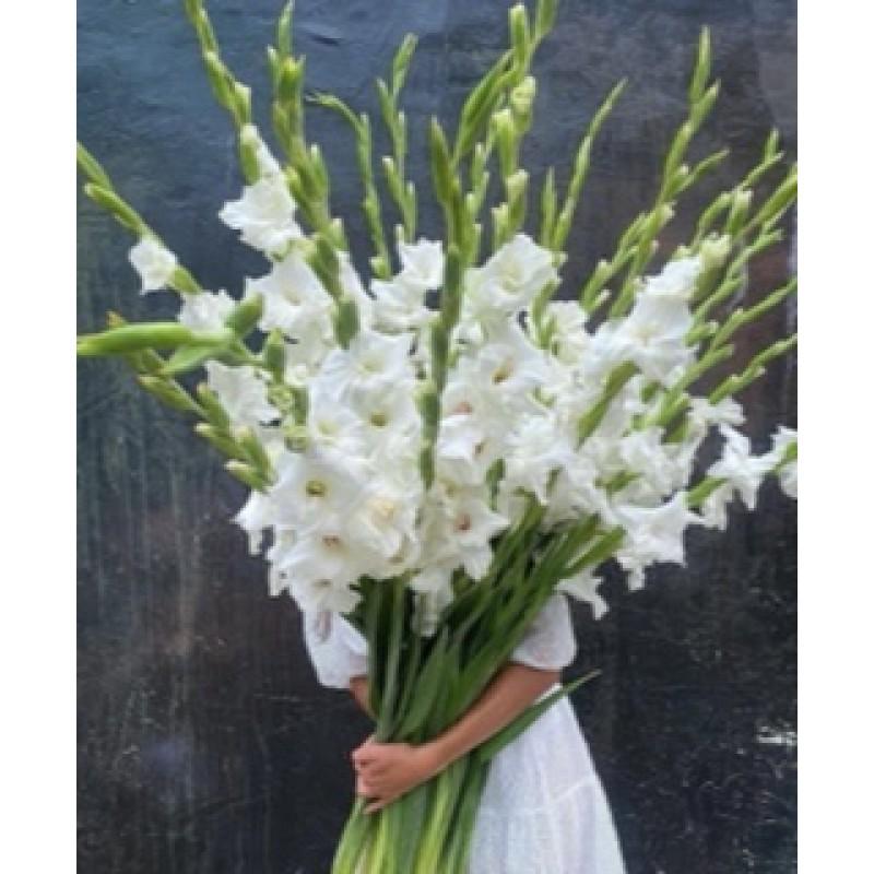 Белые гладиолусы