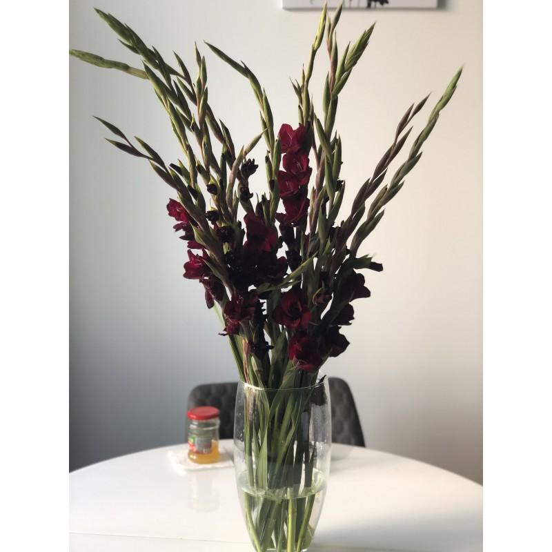 19 темно-малиновых гладиолусов в вазе