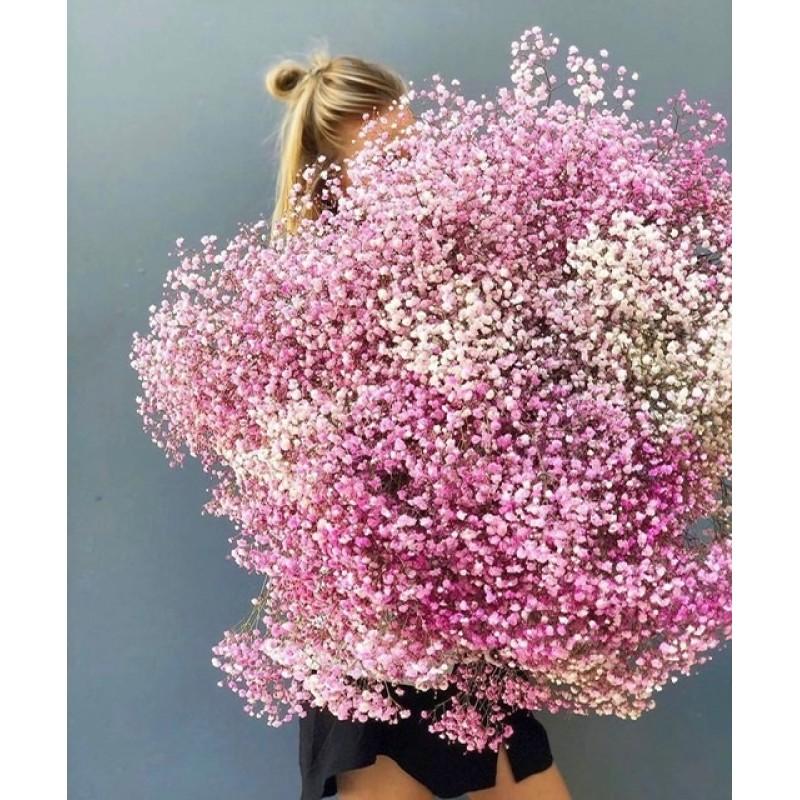 Розовая гипсофила поштучно от 15 штук