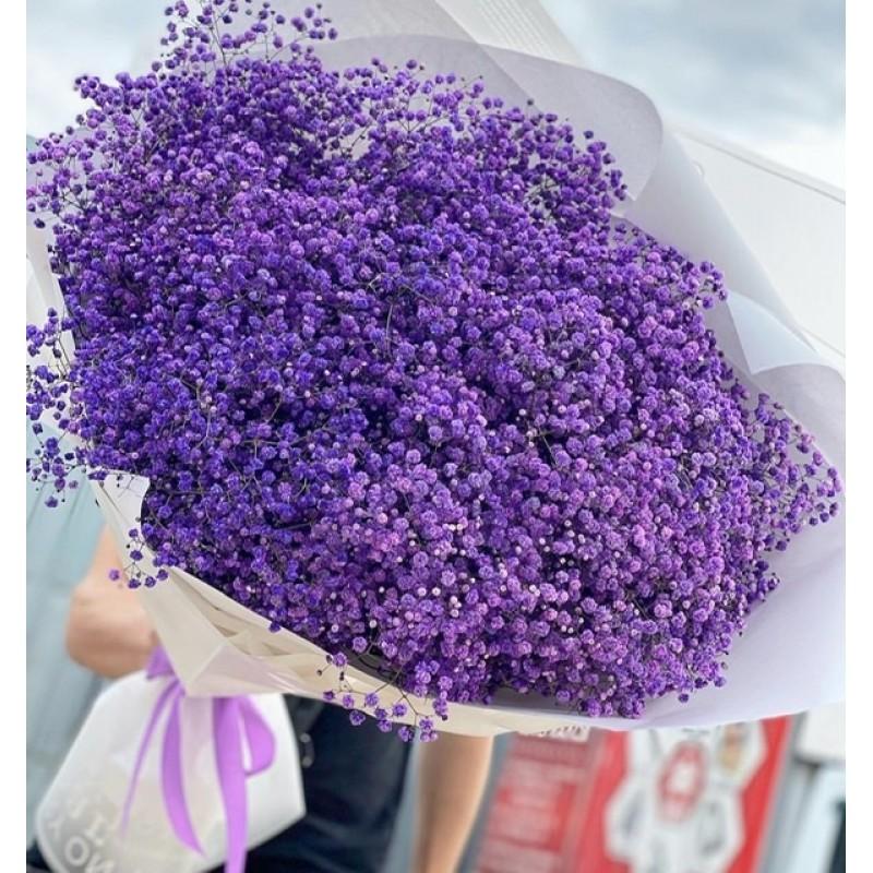 Фиолетовая гипсофила