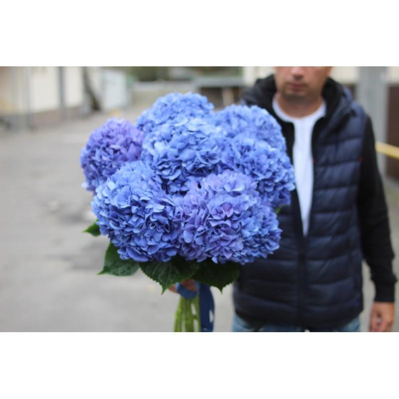 Огромная синяя гортензия