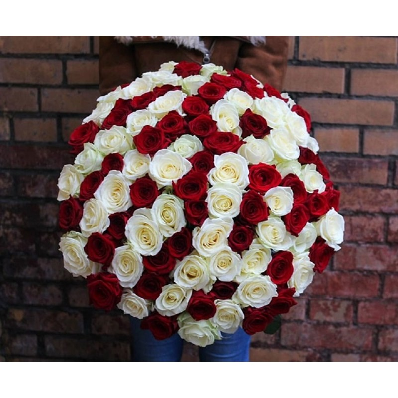 101 красно-белая роза высота 60 см.