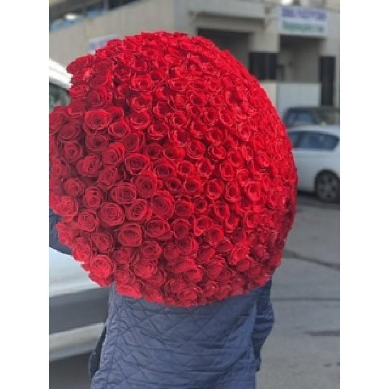 301 красная роза Фридом высота 70 см.