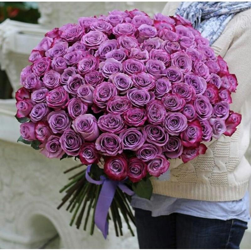 101 фиалетовая роза сорт Муди Блю