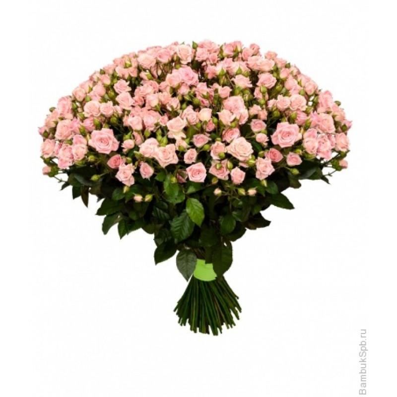 Нежные кустовые розы