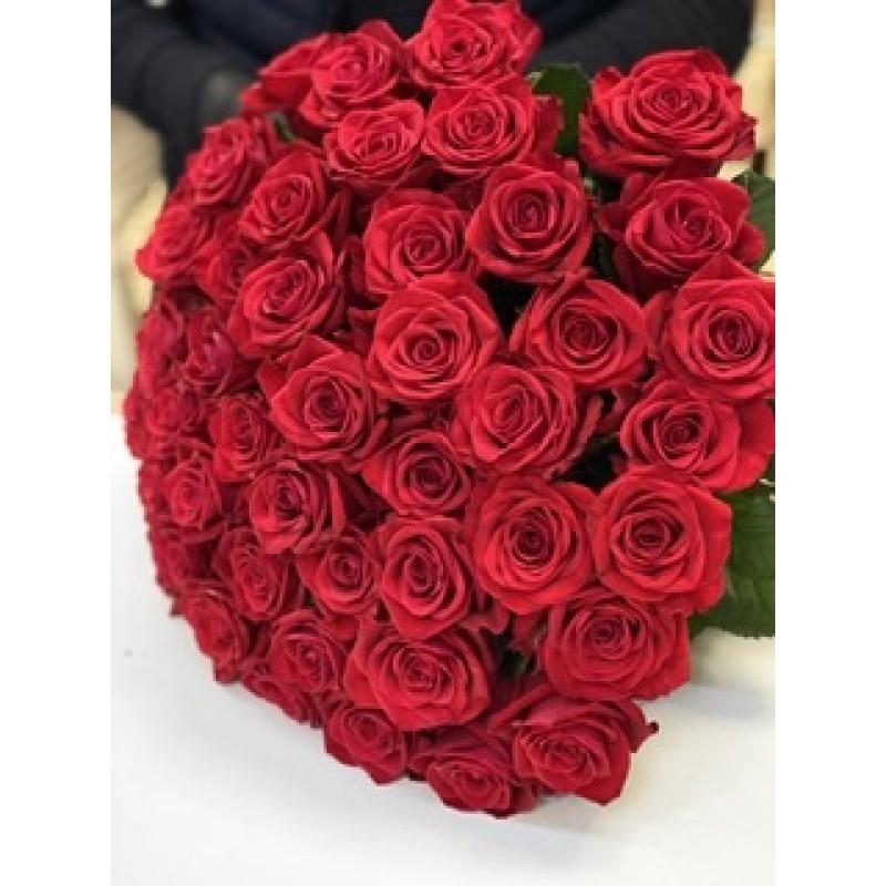 51 алая роза сорта «гуля»