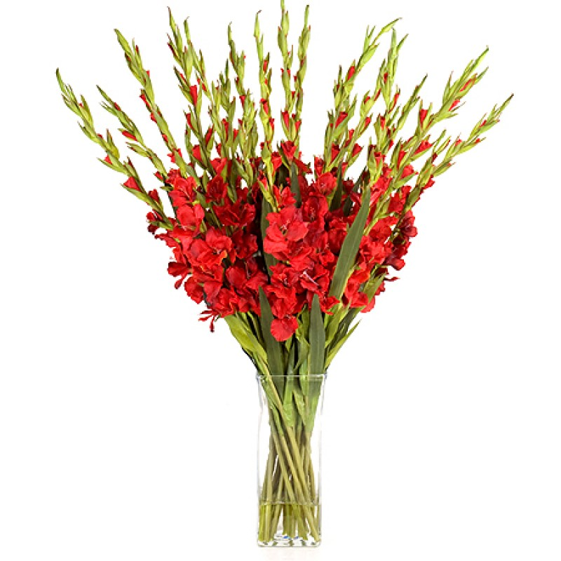 25 гладиолусов в вазе