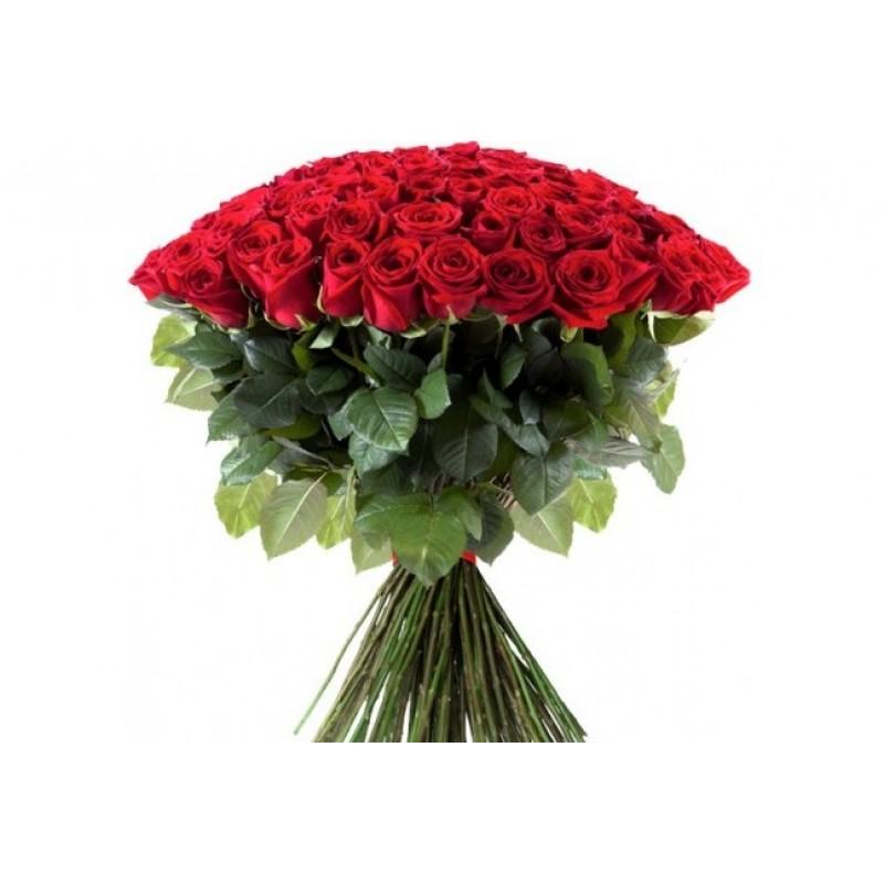 101 роза Фридом высота 80 см.