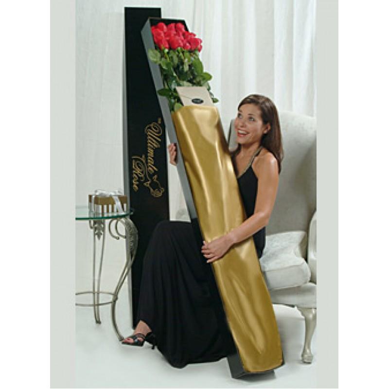 Розы высотой 2 метра