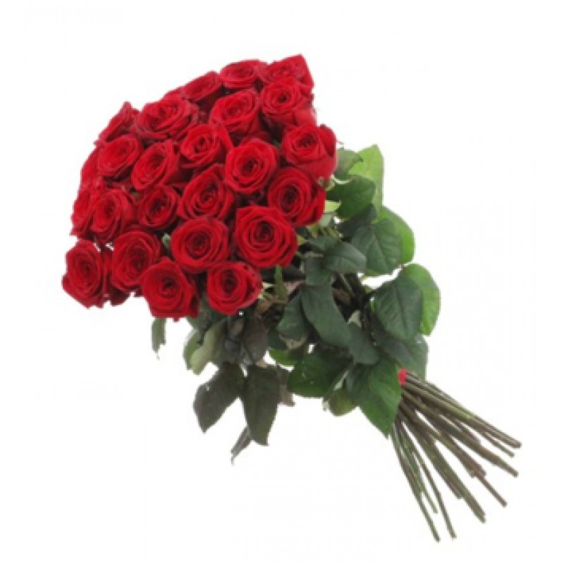 Розы высота 150 см., поштучно от 9штук