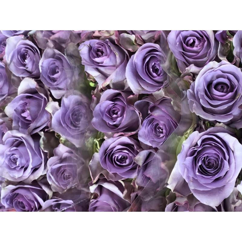 Фиолетовые Розы поштучно от 19 штук