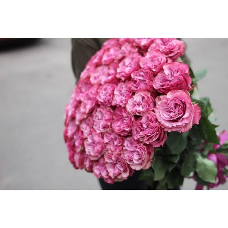 Пионовидные розы Кантри блю от 25 штук