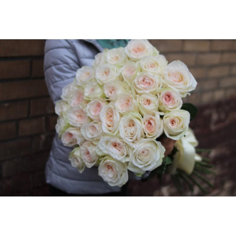33  розы Вайт о'хара