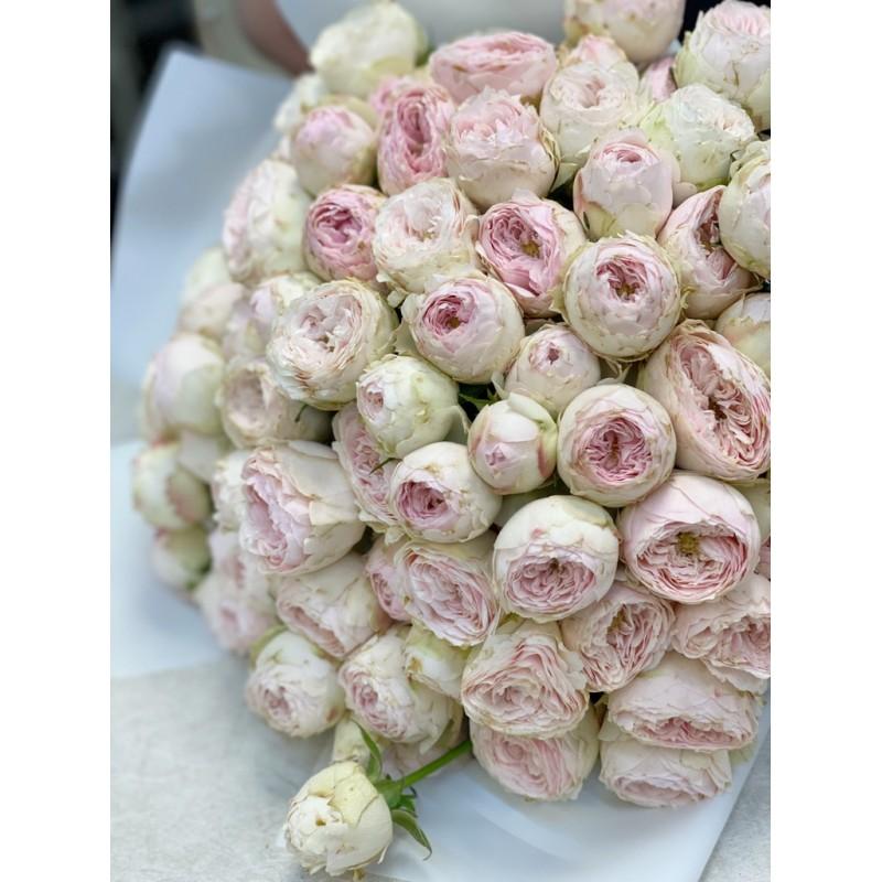 Розы Мансфилд Парк