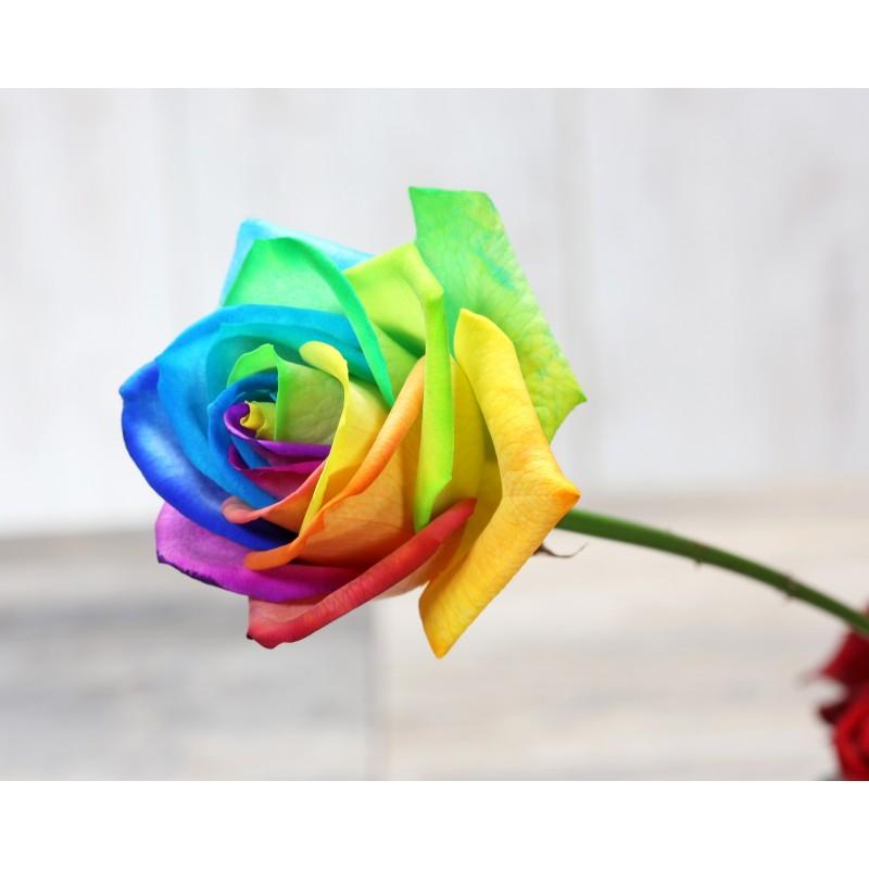Купить радужные розы поштучно