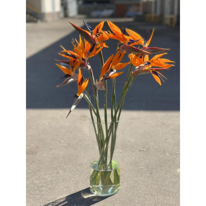15 стрелиций в вазе