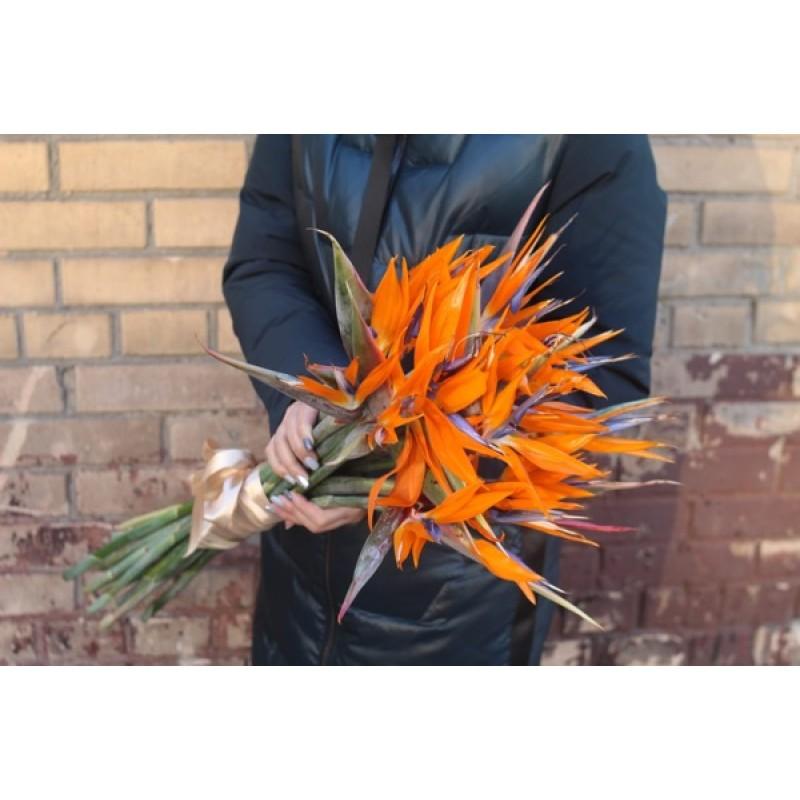 15 оранжевых красавиц