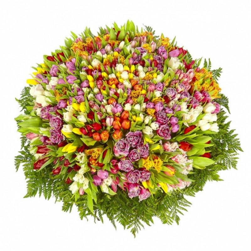 555 тюльпанов в корзине