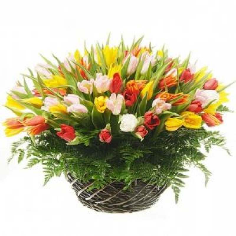 Корзина из 75 тюльпанов