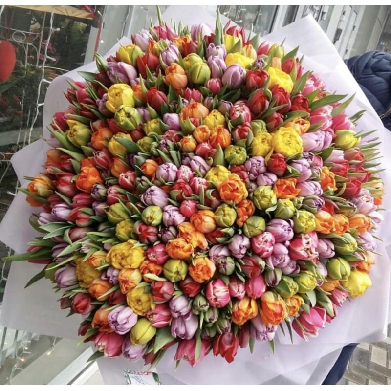 301 яркий пионовидный тюльпан