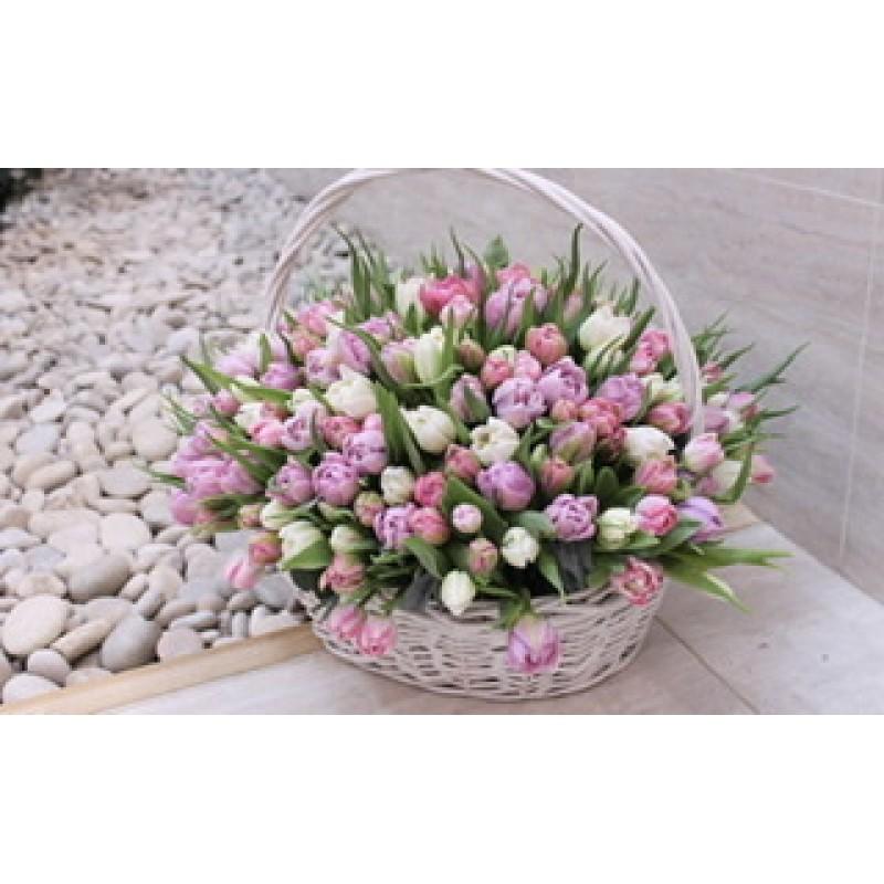 Море нежных тюльпанов