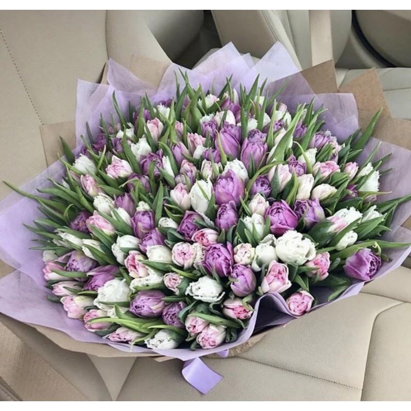 151 тюльпан